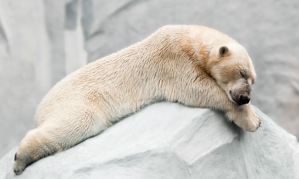 uyuyarak kilo verme